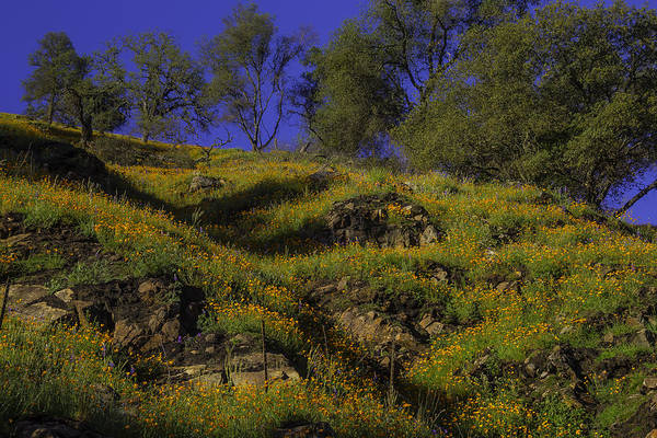 Hillside Photograph - Afternoon Poppies by Garry Gay