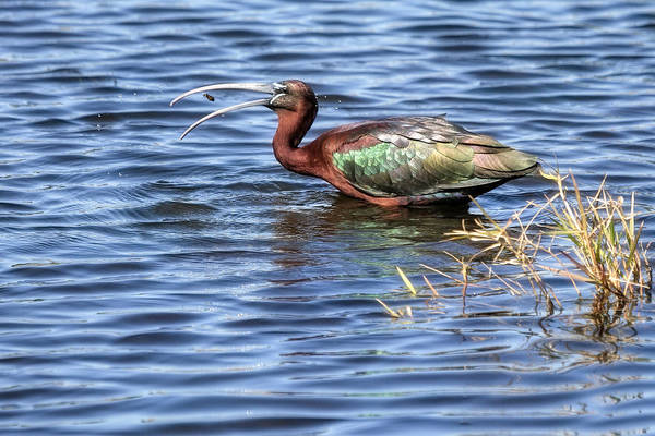Glossy Photograph - Afternoon Snack by Donna Kennedy