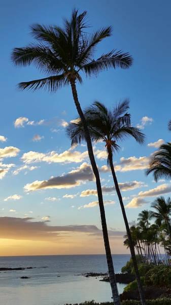 Photograph - Against The Blue Sky by Pamela Walton