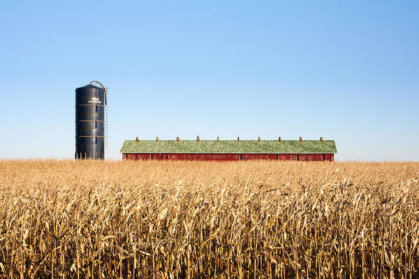 Corn Field Photograph - Against The Grain by Todd Klassy