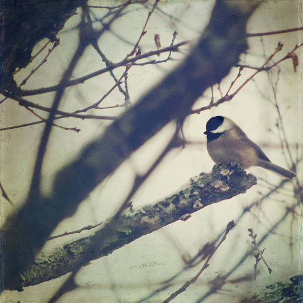 Chickadees Photograph - Against The Wind by Amy Tyler
