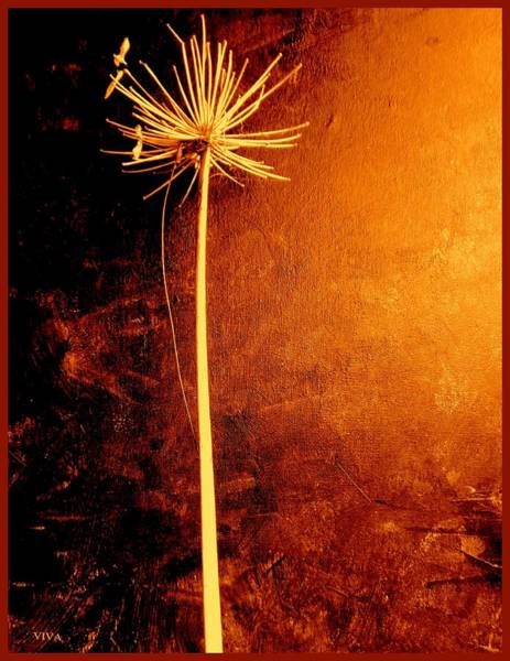 Photograph - Agapanthus After The Storm by VIVA Anderson