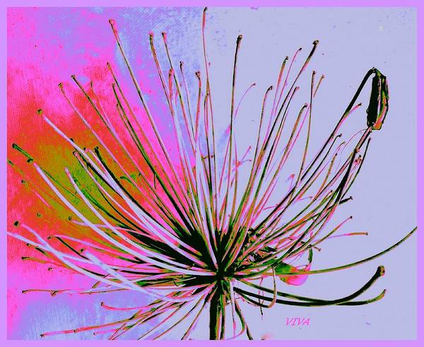 Photograph - Agapanthus In The Pink by VIVA Anderson