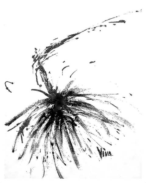 Drawing - Agapanthus Original Drawing by VIVA Anderson