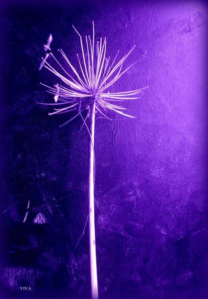 Photograph - Agapanthus Purple Glory by VIVA Anderson
