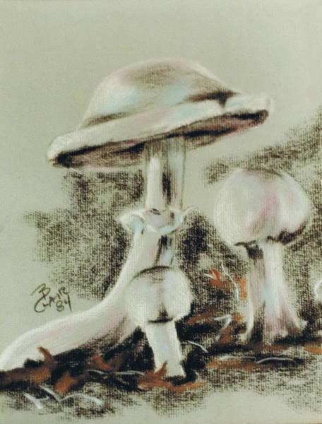 Pastel - Agaricus Micromyathus by Barbara Keith