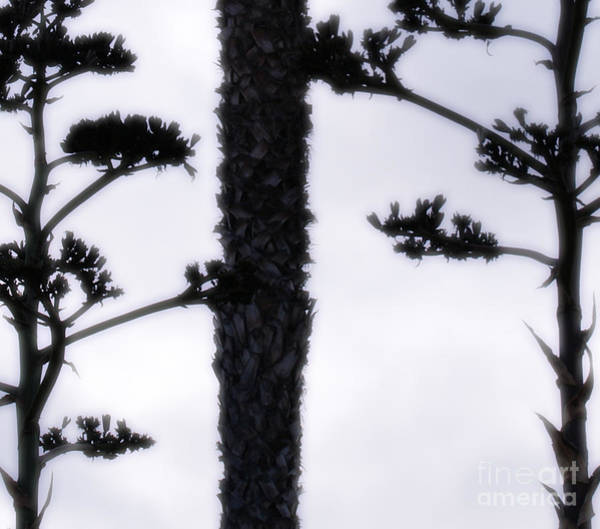 Agave And Palm Art Print
