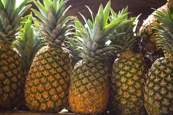 Pineapple Photograph - Ageless  by Betsy Knapp