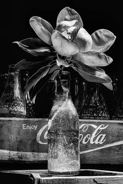 Photograph - Aging Gracefully Black And White by JC Findley