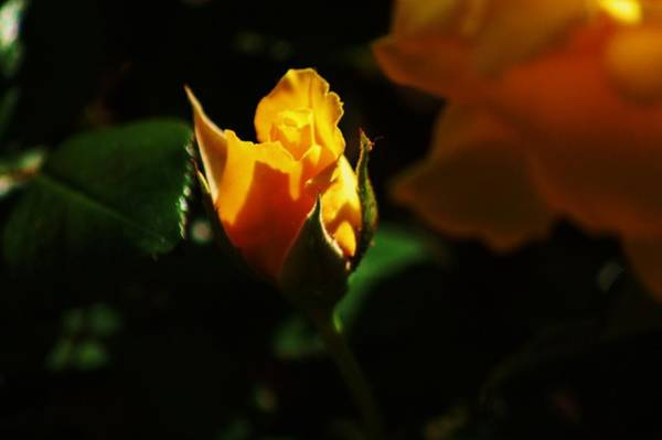 Photograph - Aglow by Helen Carson