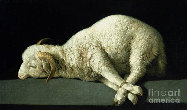 Wall Art - Painting - Agnus Dei by Francisco de Zurbaran