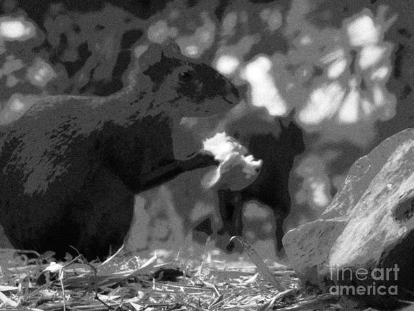 Agouti At Supper Art Print