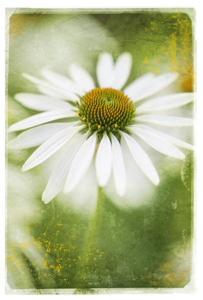 Photograph - Daisy Ah Tribute by Jill Love