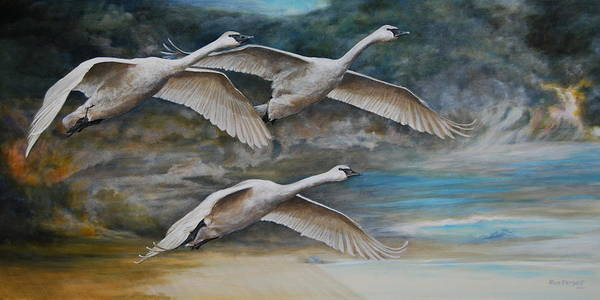 Trumpeter Swan Painting - Ahead Of The Storm - Trumpeter Swans On The Move by Dreyer Wildlife Print Collections