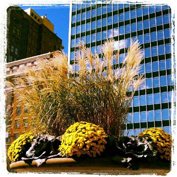 Photograph - Aic Autumn Display by Tammy Winand