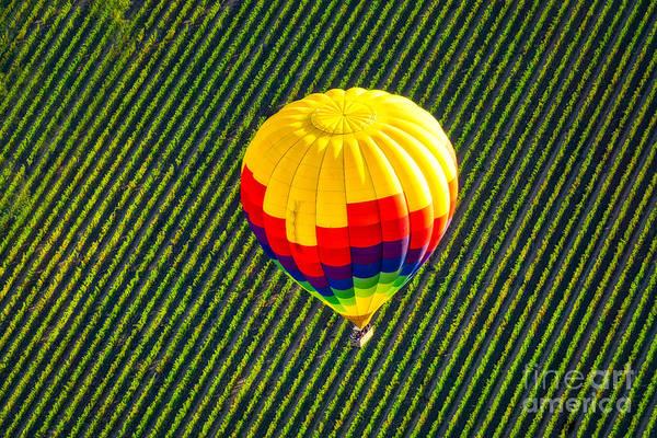 Wall Art - Photograph - Air Balloon Soars Over Green Vineyard by DAC Photo