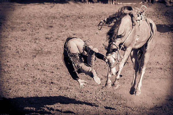 Wall Art - Photograph - Airborne by Caitlyn Grasso