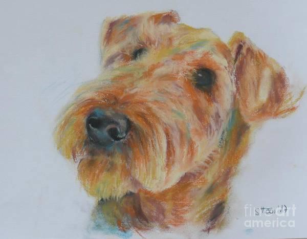 Wall Art - Drawing - Airdale Terrier by Sabina Haas