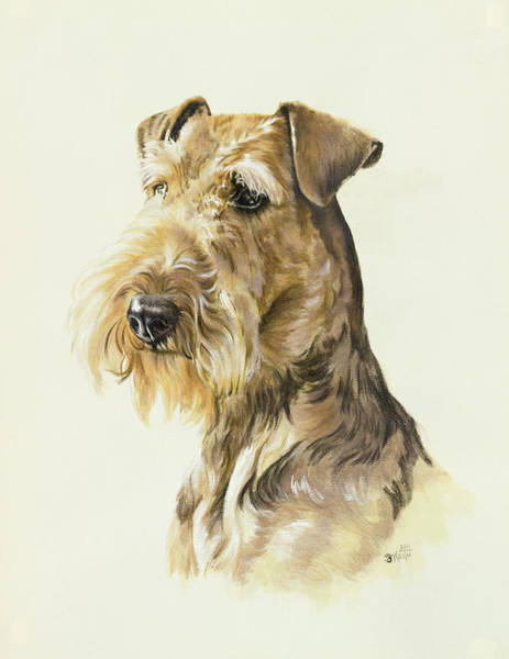 Wall Art - Painting - Airedale by Barbara Keith