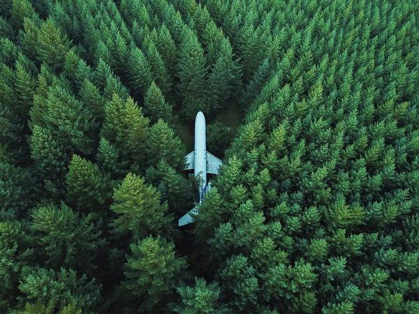 Photograph - Airplane In Forest by David Kovalenko