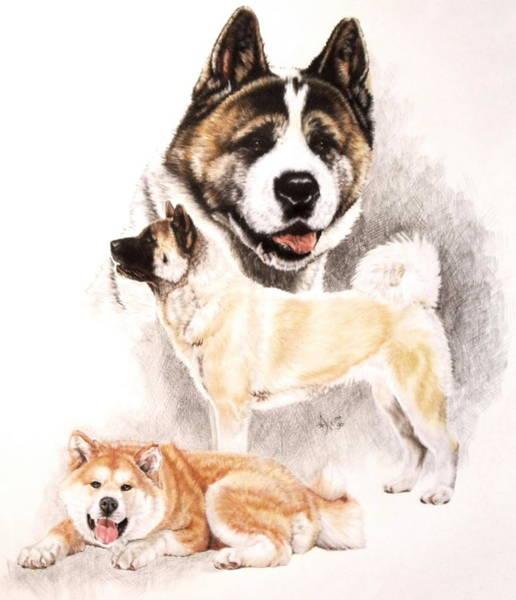 Drawing - Akita by Barbara Keith