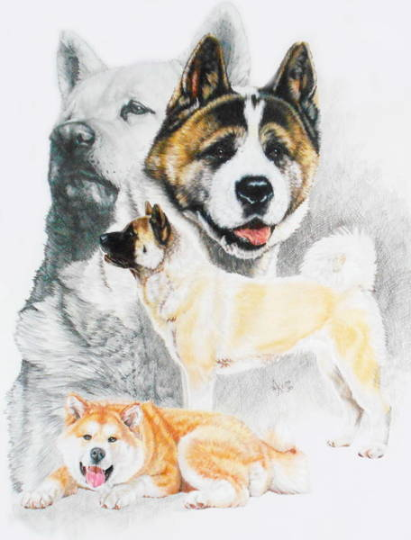 Wall Art - Drawing - Akita Ken Revamp by Barbara Keith