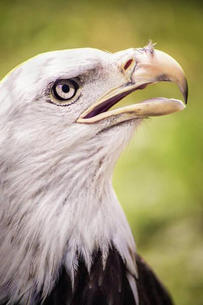 Photograph - Akron Eagle by Don Johnson