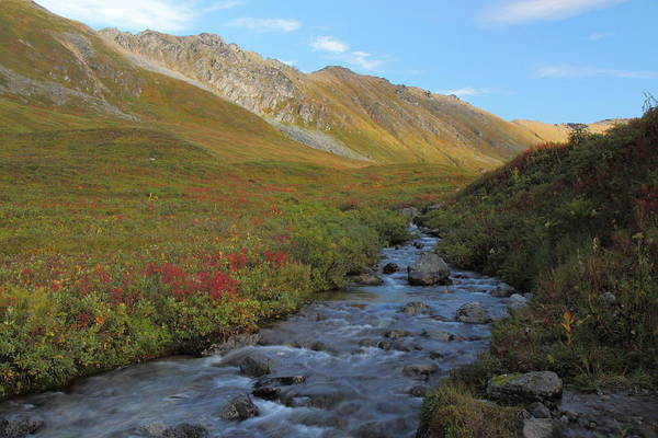 Photograph - Alaska Fireweed And Willow Creek Along Hatcher Pass Road by Steve Wolfe