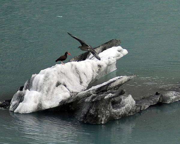 Red Wolf Photograph - Alaskan Bird by Don Wolf
