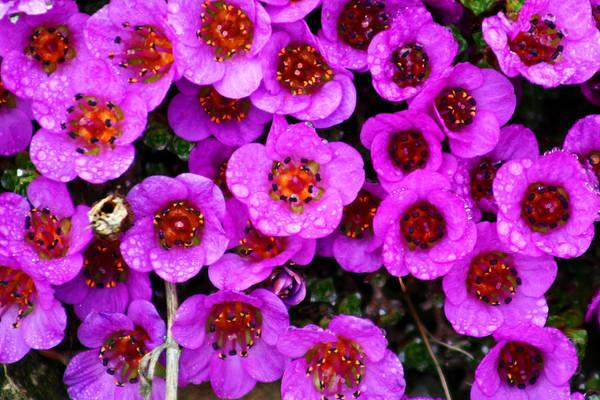 Photograph - Alaskan Wild Flowers by Anthony Jones