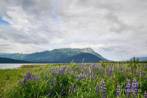 Photograph - Alaskan Wildflowers by Paul Quinn