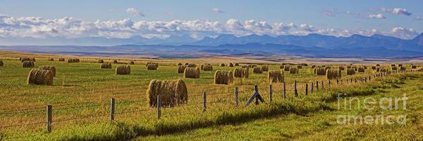 Photograph - Alberta by Brad Allen Fine Art