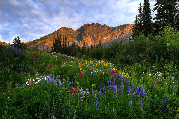 Photograph - Albion Basin by Ryan Smith