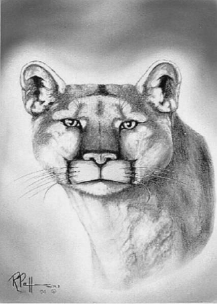 Bengal Tiger Drawing - Alert Cougar by Bob Patterson