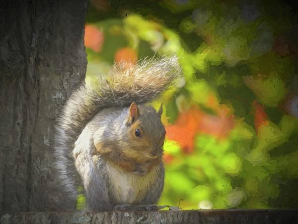 Photograph - Alert Gray Squirrel Sitting On A Stump. by Rusty R Smith