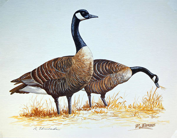 Canada Goose Wall Art - Painting - Alert Sentinel by Raymond Edmonds