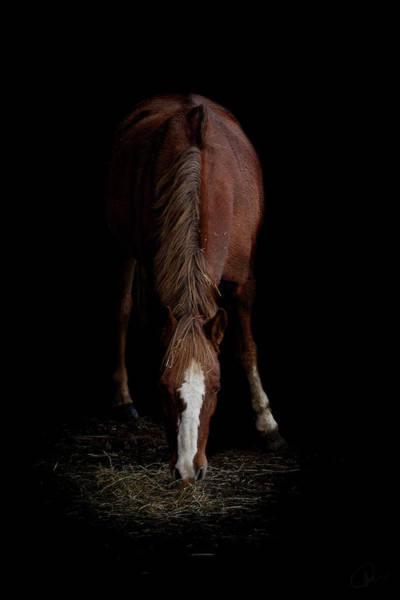 Ponies Photograph - Alfresco by Paul Neville