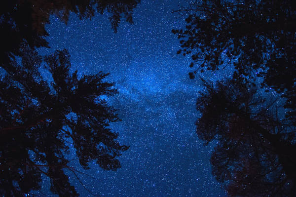 Wall Art - Photograph - Algonquin Skies by Cale Best