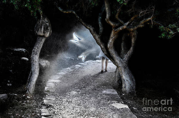 Deep Woods Wall Art - Photograph - Alice In Wonderland by Maxim Images Prints