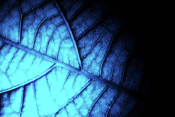 Photograph - Alien Leaf by John Williams