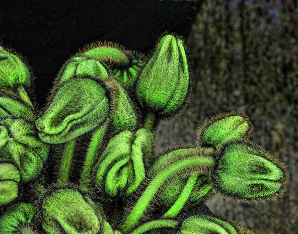 Feed Me Photograph - Alien Plant by Helaine Cummins