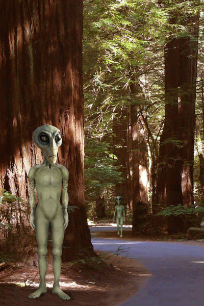 Wall Art - Photograph - Alien Vacation - Redwoods California by Mike McGlothlen
