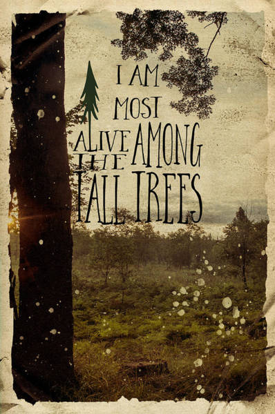 Photograph - Alive Among The Tall Trees by Christina VanGinkel