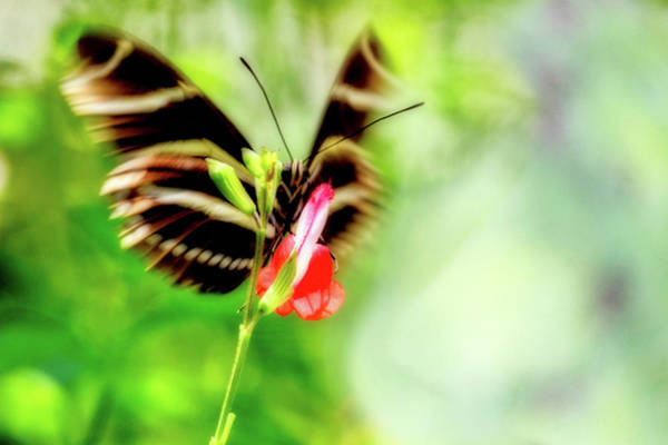 Wall Art - Photograph - All A-flutter by Ches Black