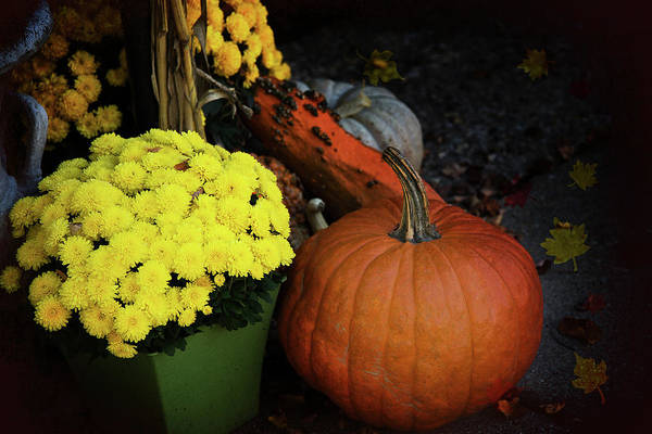 Photograph - All About Fall by Milena Ilieva