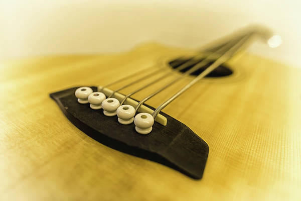 Photograph - All About The Bass by Nick Bywater