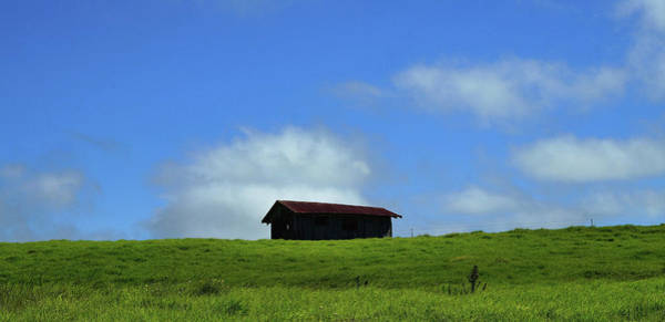 Photograph - All Alone On The Hill by Pamela Walton