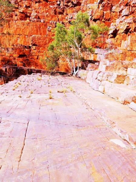 Photograph - All Alone - Ormiston Gorge by Lexa Harpell