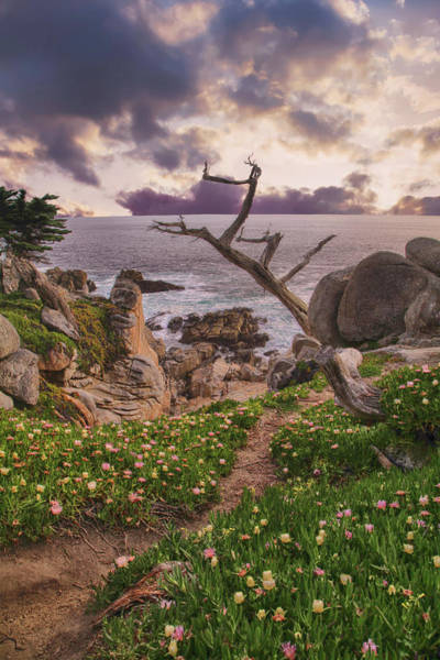 Pebble Beach Photograph - All Along by Laurie Search