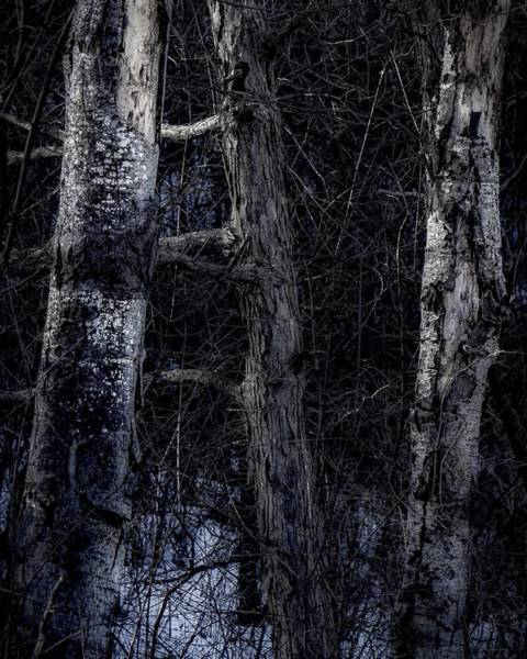 Photograph - All Bark by Kendall McKernon